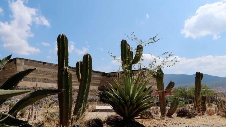 オアハカ,観光,メキシコ,ツアー,現地ツアー,感想,金額