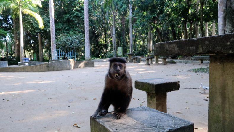 ブラジル,リオデジャネイロ,観光,自然,ラージェ公園,インスタ