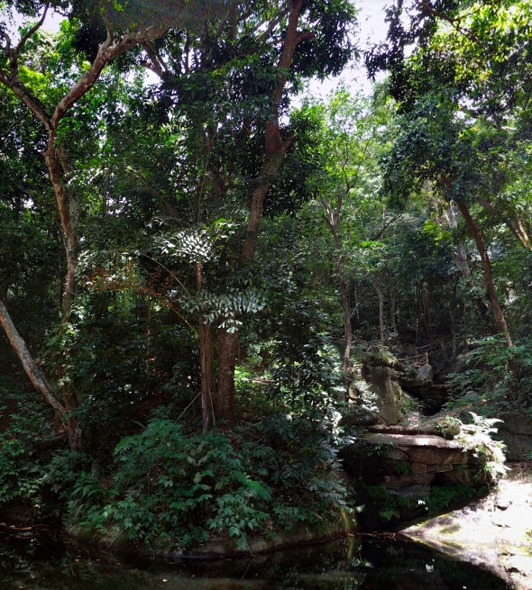 ブラジル,リオデジャネイロ,観光,自然,ラージェ公園