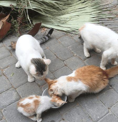 狂犬病,モロッコ,病院,猫