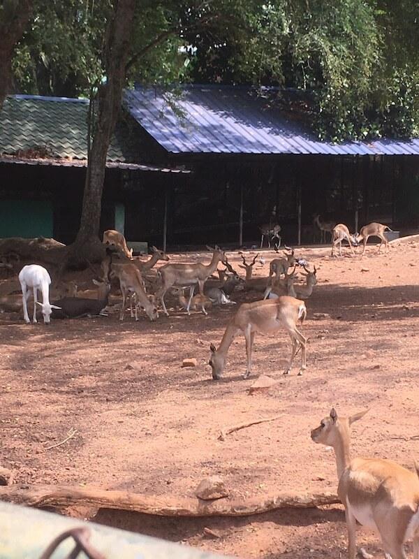 インド,トリバンドラム,動物園,楽しみ方