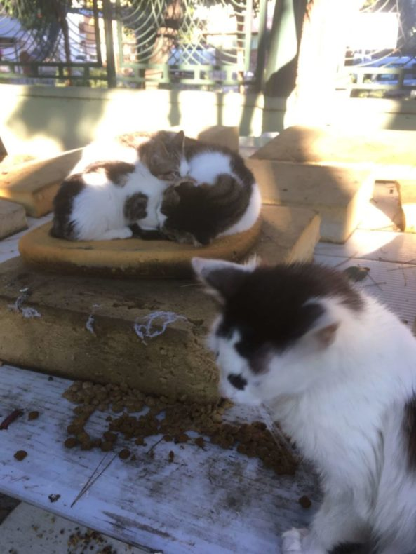 イズミール,トルコ,猫,猫公園,猫好き,観光