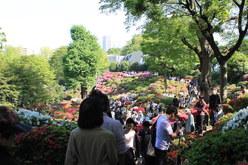 東京,文京,根津神社,祭り,ツツジ
