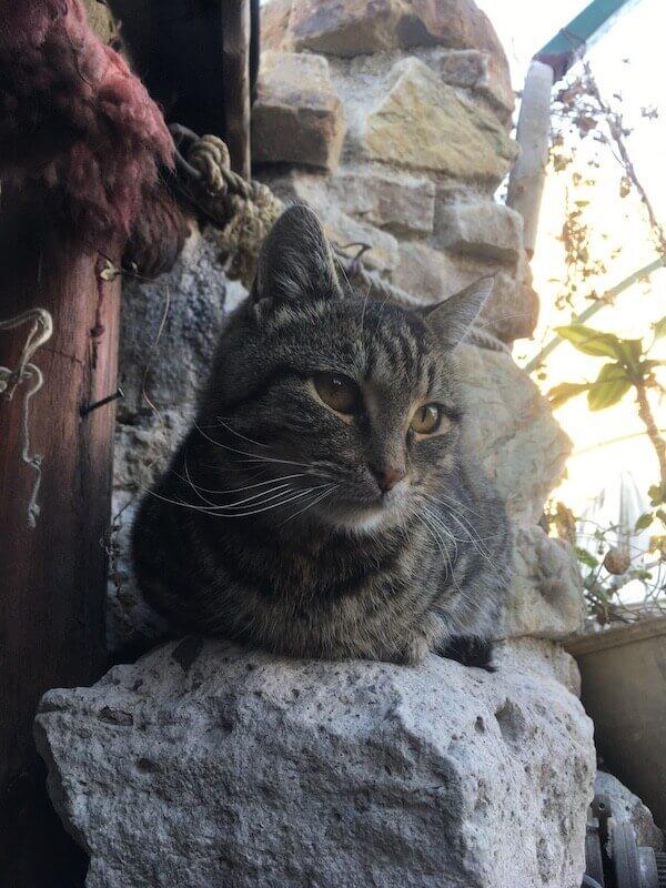トルコ,カッパドキア,猫,ネコ,ねこ