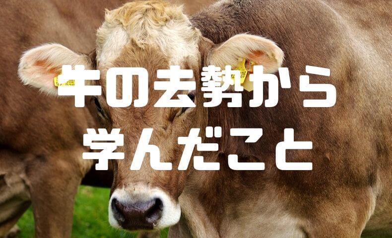 牛の去勢を手伝って学んだこと。生命への感謝と、生命との遠さ。