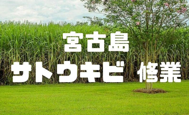 宮古島でサトウキビの収穫体験で学んだ、消費者としての重要な考え方。