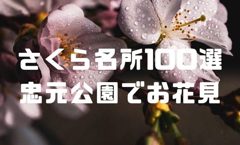 """忠元公園でお花見!""""日本さくら名所100選""""の美しさ。"""
