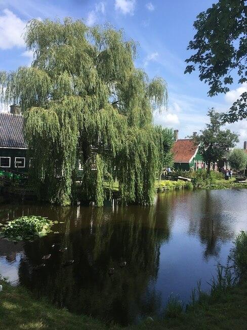 オランダ,風車,村,ザーンセスカンス