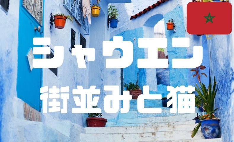 シャウエンの可愛い猫と青い街並み。猫映えスポットを堪能しよう。