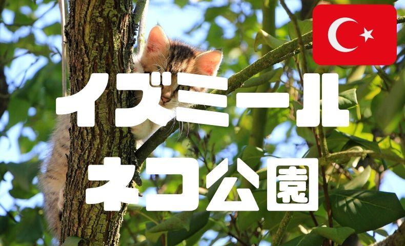 【イズミールの穴場観光】猫好き必見の猫パラダイス公園で、癒しのひと時を。