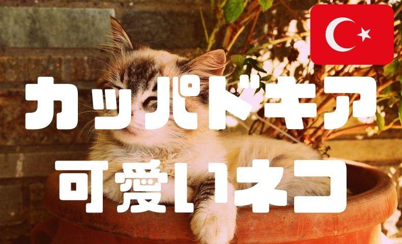 トルコの猫-カッパドキア編!気球だけじゃない、猫と楽しむカッパドキア。