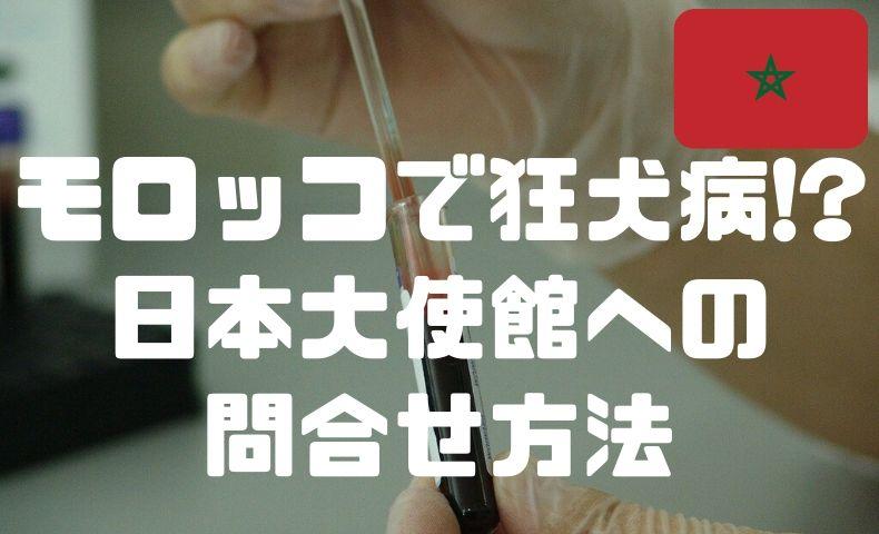 モロッコで猫から狂犬病?フェズの病院と、日本大使館への問い合わせ方法。